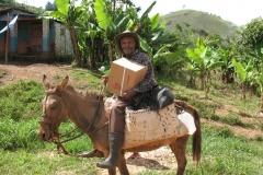 14-Haitian-on-dunkey